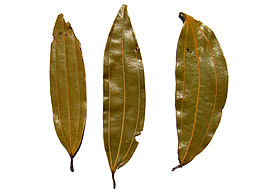 Bay rum is a product of bay leaves