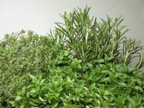 thyme, oregano and rosemary medicinal herbs