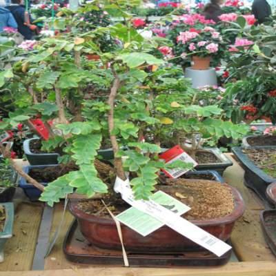 tamarind tree amonst other herbs