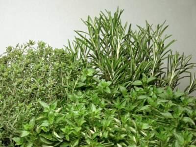 thyme, oregano and rosemary
