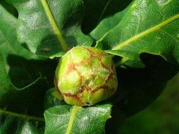 Artichoke leaves
