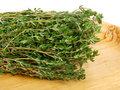 thyme medicinal herb