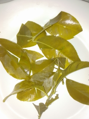 Boiled lemon leaves done at my home in Jamaica. Medicinalherbs-4u.com