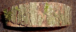 White Oak bark was once used to prevent miscarriage.