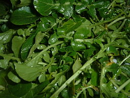 Watercress: By Masparasol (Own work) [CC-BY-3.0 (http://creativecommons.org/licenses/by/3.0)], via Wikimedia Commons