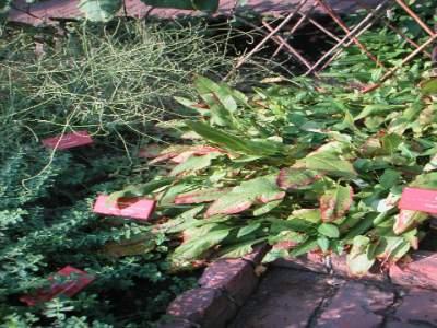 Cloister herbs