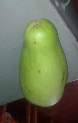 Jamaican Squash