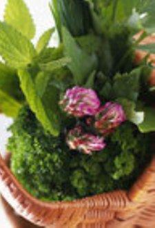 medicinal herbs growing in po