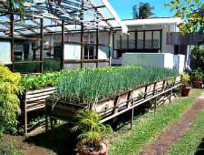 Tobago Herb Garden