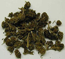 ganja plant