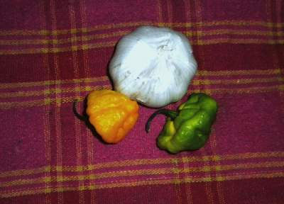 garlic with scotch bonnet peppers