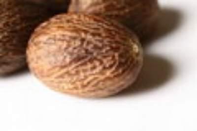 Nutmeg medicinal herb