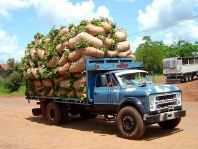 truck laden with yerba mate